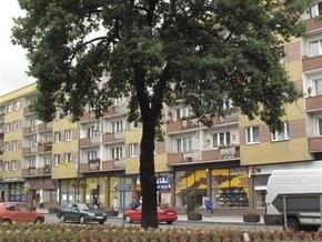 Власти польского города решили уничтожить дуб - подарок Гитлера