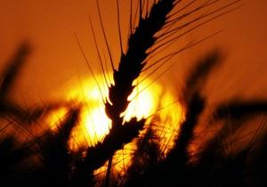 Пресса Украины - В 2013 зерна будет на 20% больше, чем в прошлом году