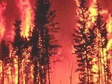 В семи областях Украины горят леса и степи