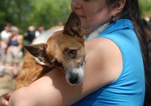 В Киеве открылось послеоперационное отделение для  бездомных собак