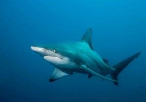 МИД Израиля опроверг причастность Моссада к нападению акул на туристов в Египте