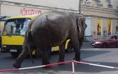 По центру Одеси прогулявся слон