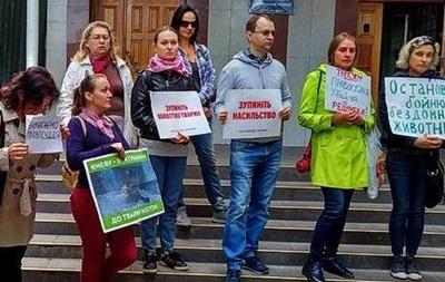 У Києві садист за два місяці знівечив 15 котів. 18+