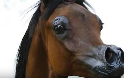 У США вивели коня, як у мультику Disney