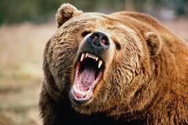 Під Воронежем ведмідь утік із зоопарку і вбив пенсіонера