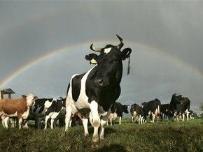 Кабмин утвердил минимальные цены на молоко и скот