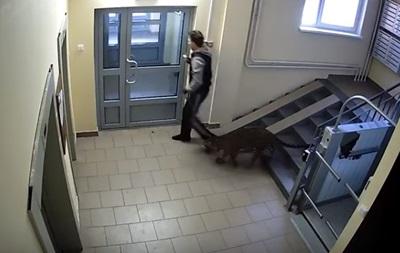 В Сети показали, как россиянин выгуливает леопарда