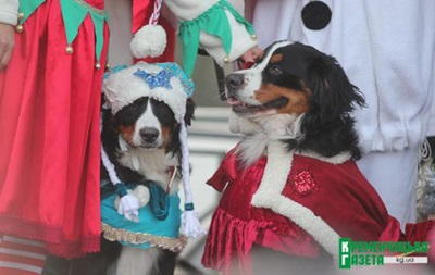У Кременчуці провели новорічний собачий парад