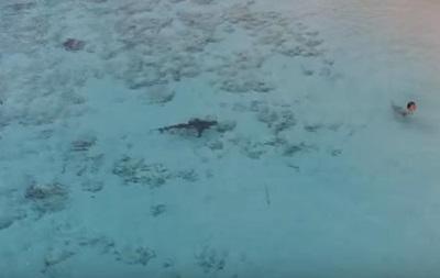 Хлопчик на Багамах дивом втік від чотирьох акул