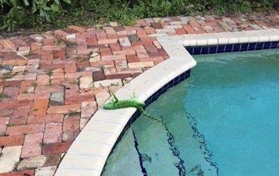 У Флориді через похолодання почався  ігуанопад