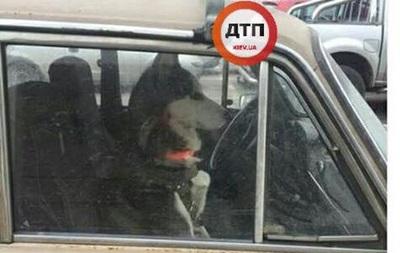 У Києві собака другий день сидить у закритій машині