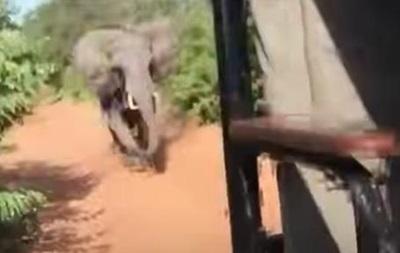 В Африці слон напав на авто з туристами
