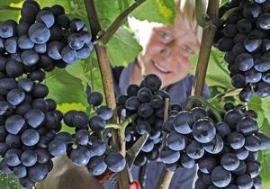 Виноградная диета эффективна при нарушениях обмена веществ
