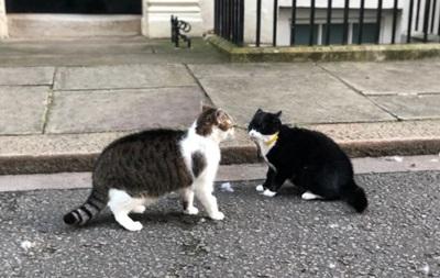 У Лондоні побилися коти прем