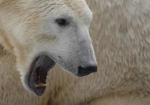 Версии гибели Кнута: знаменитый медведь был эпилептиком