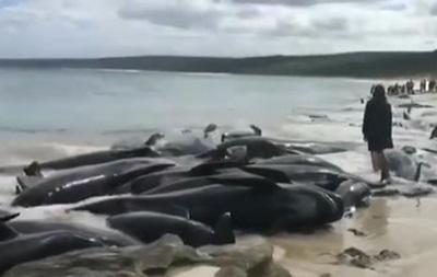 В Австралії на берег викинулися дельфіни