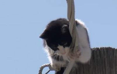 У США кіт просидів на стовпі кілька днів