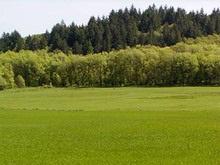 Чиновник передал в собственность землю с памятниками археологии