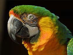 Российские пограничники заразились орнитозом от попугаев-нелегалов