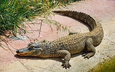 В Белгород-Днестровском с пятого этажа жилого дома упал крокодил