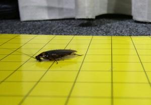 С китайской фермы сбежали более миллиона американских тараканов