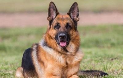 ЄС дасть білоруським митникам 130 тис. євро на собак