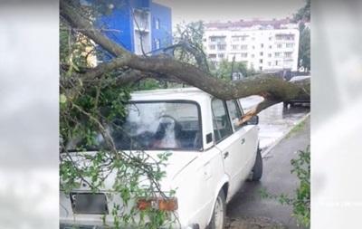 В Киевской области ураган сломал десятки деревьев