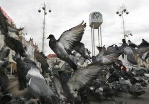 Во Франции голубям начали давать противозачаточные средства