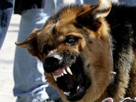 В центре Киева на женщину напала стая собак