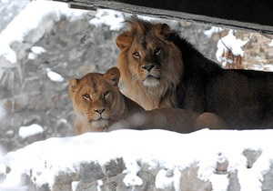 Фотогалерея: Звери на морозе. Зима в киевском зоопарке