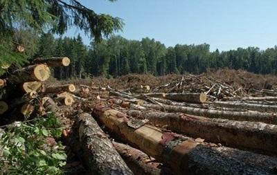 ВР ввела відповідальність за вивезення лісу