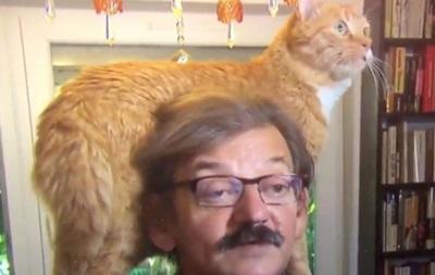 Кот увірвався в інтерв ю і став героєм Мережі