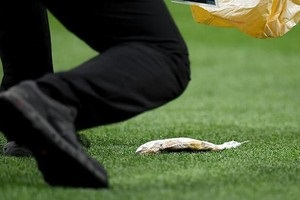 Фанаты на матче Англия - Хорватия выбросили на поле рыбу