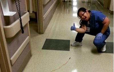 Сеть удивило больничное фото со сбежавшей пиявкой