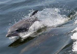 В Японии протестуют против фильма о забое дельфинов