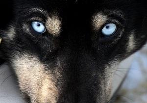 В Киеве возобновились случаи отравления собак