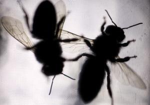 В Луганской области учитель рассказал о перевоплощении в насекомых. Ученица решила покончить с собой