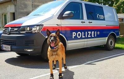 У Відні поліцейським собакам видали черевички