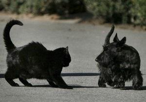 New Scientist: Собаки лучше кошек