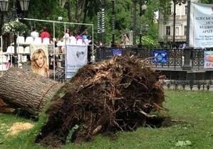 Ураган в Одессе -В Одесской области ураган повалил около трех тысяч деревьев