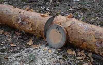 В Україні загинули дерева на площі 400 тисяч гектарів