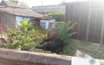 У Миколаївській області поліція і мисливець приборкували скаженого бика