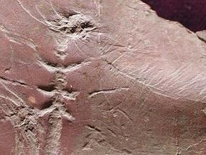 Обнаружен отпечаток доисторической стрекозы