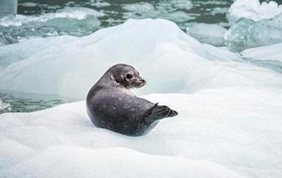В Арктике тает самый старый ледник