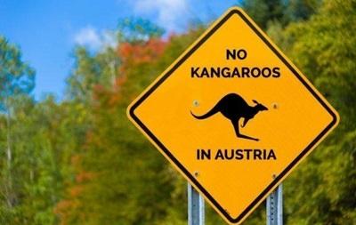 В Австрії помітили кенгуру