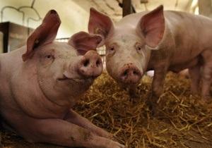 В Запорожской области из-за вспышки африканской чумы уничтожили 200 свиней