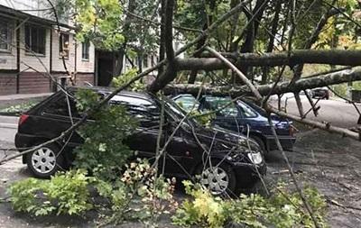 У Дніпрі дерево розчавило два автомобілі