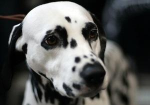 Во Франции мужчину приговорили к тюремному заключению за расправу над собакой