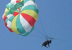 На одном из пляжей Азовского моря осел летал на парашюте над побережьем