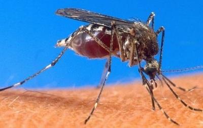 В Івано-Франківську зафіксовано випадок малярії